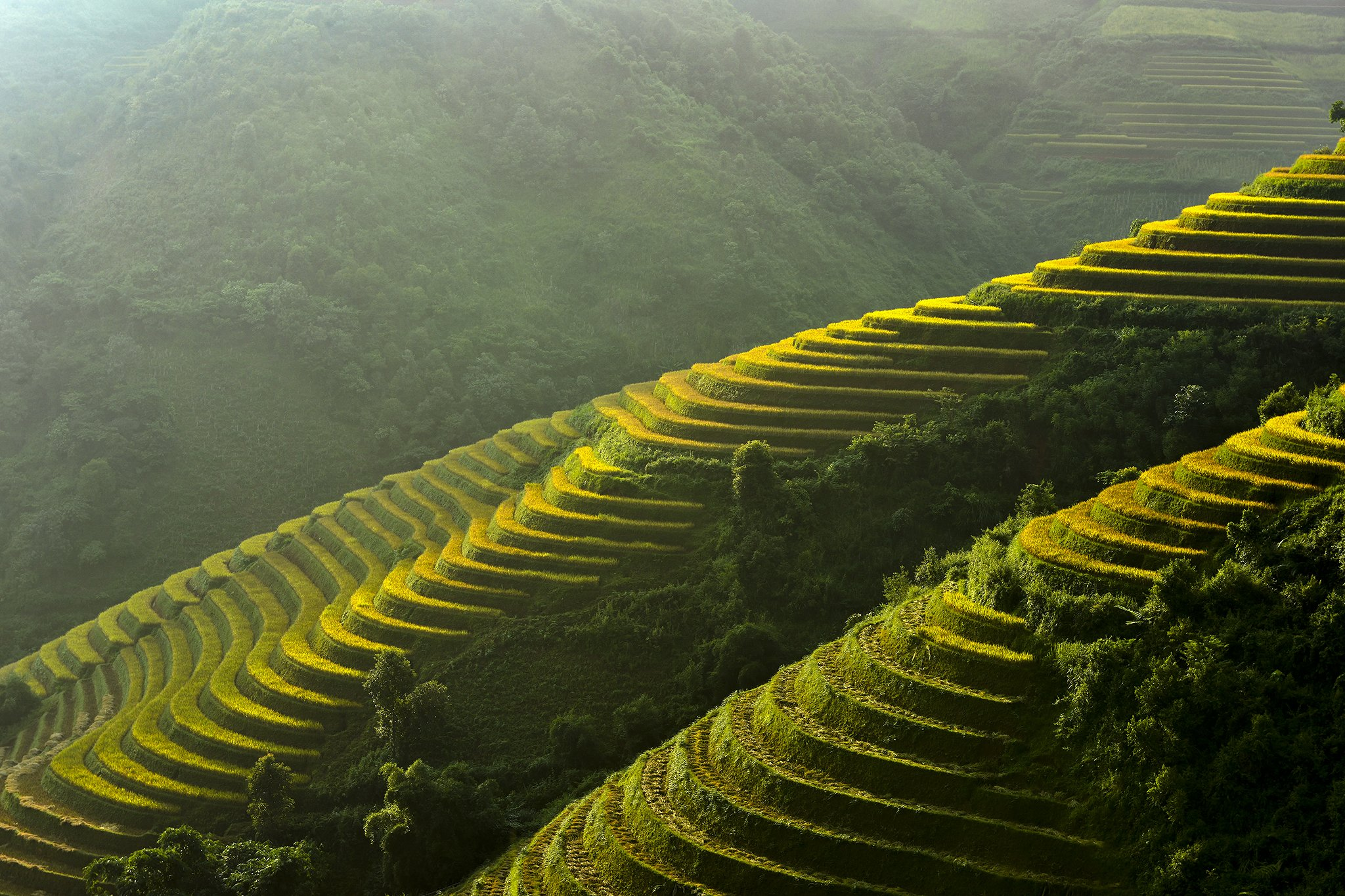 Asia, Asian, Field, Paddy, Rice, Terraces rice field, Saravut Whanset