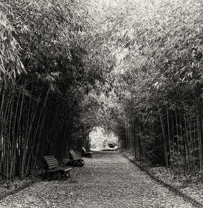 абхазия,ботанический сад,аллея,бамбук, скамеечки,зима, Toska