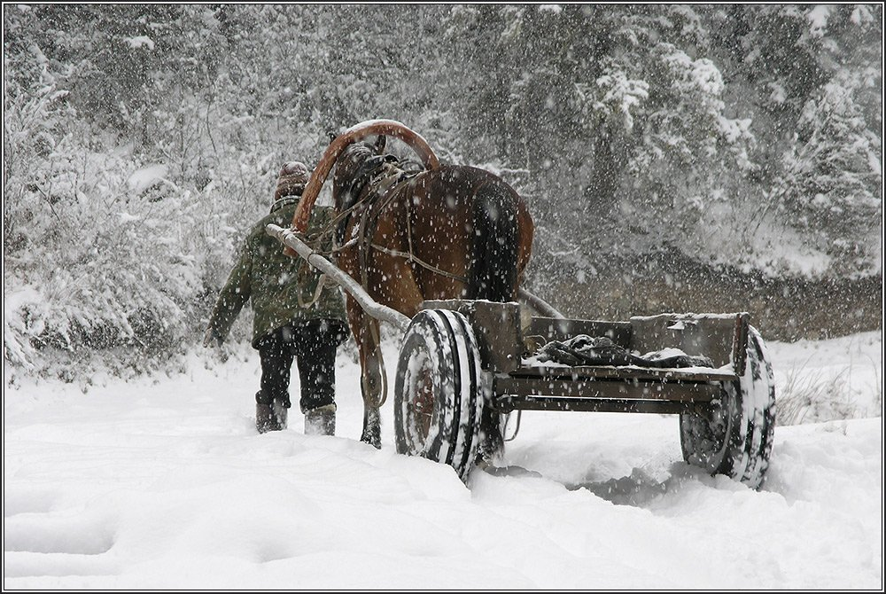 алтай, зима, снег, конь, Виталий Житков