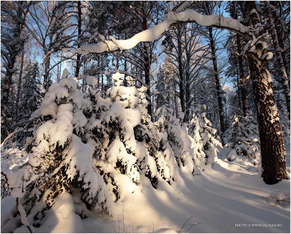 зима,снег,лес,salman,, salman
