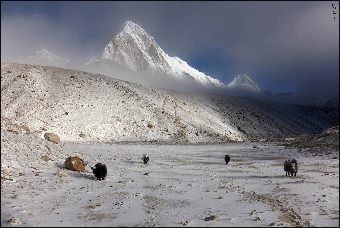 непал, гималаи, трек к бл эвереста, nepal, himalaya, trek to bc everest, пумо ри, pumo ri, кала паттар, kala patthar, Оксана Борц