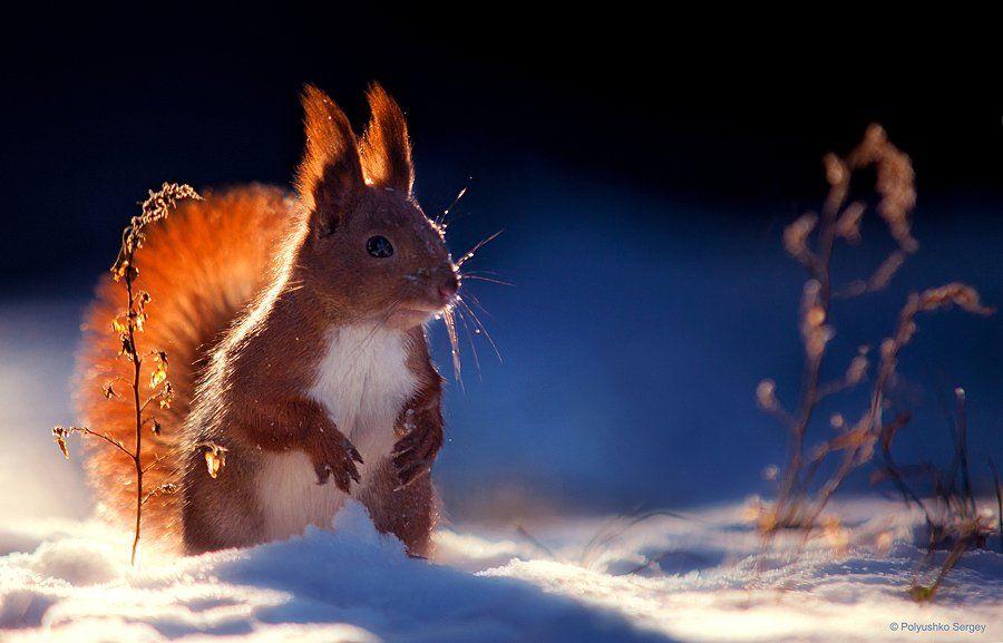 Snow, Squirrel, Winter, Полюшко Сергей
