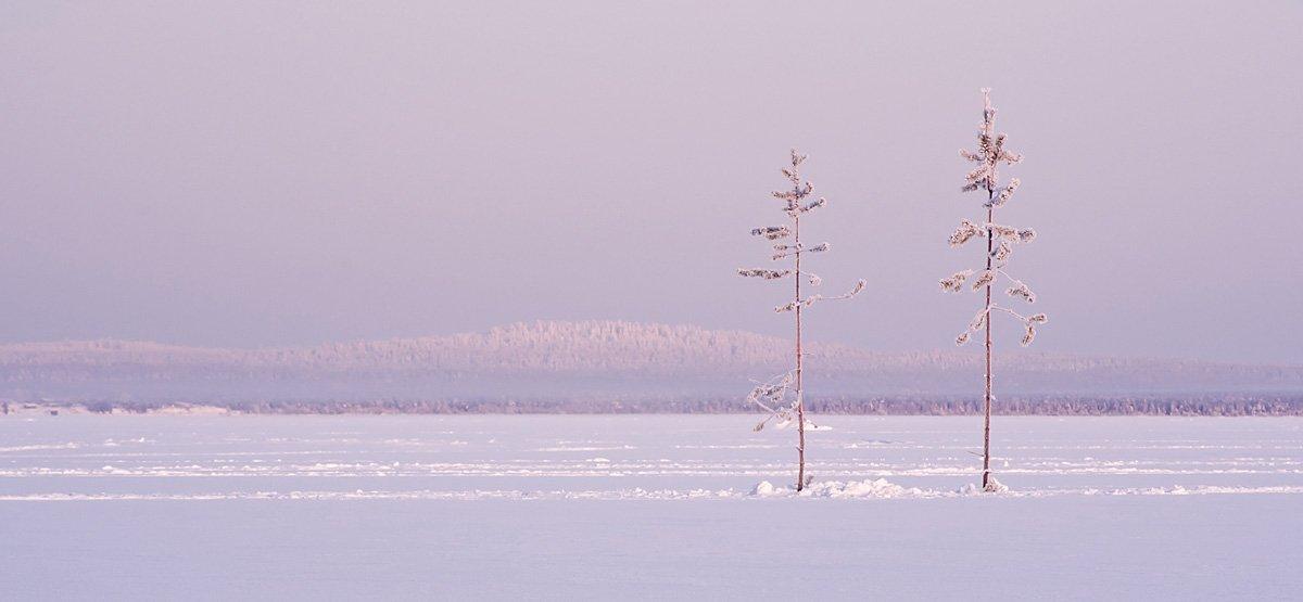 куйто, карелия, сосна, зима, снег, озеро, Ирина Белотурова