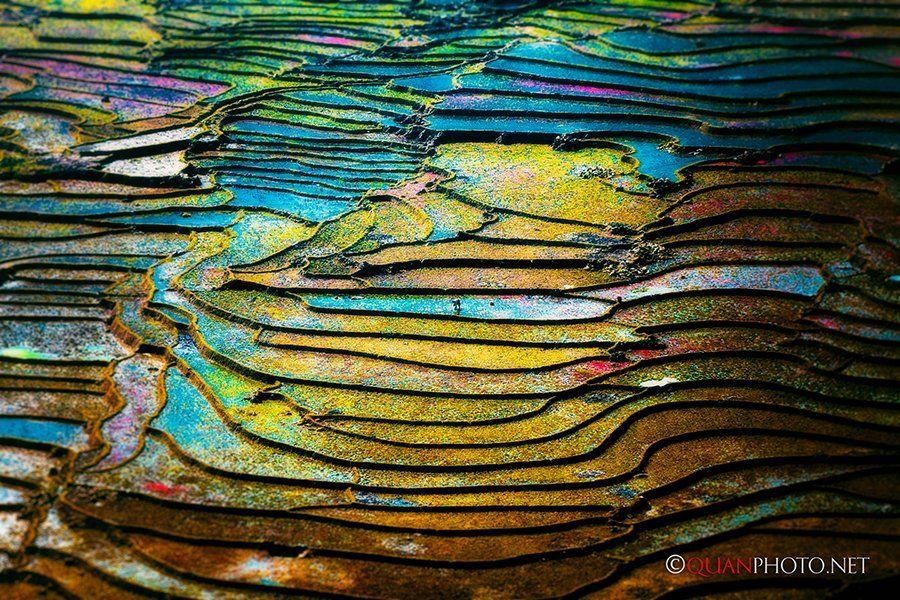 #quanphoto, #landscape, #colorful, #rice, #terraces, #farmland, #agriculture, #vietnam, quanphoto