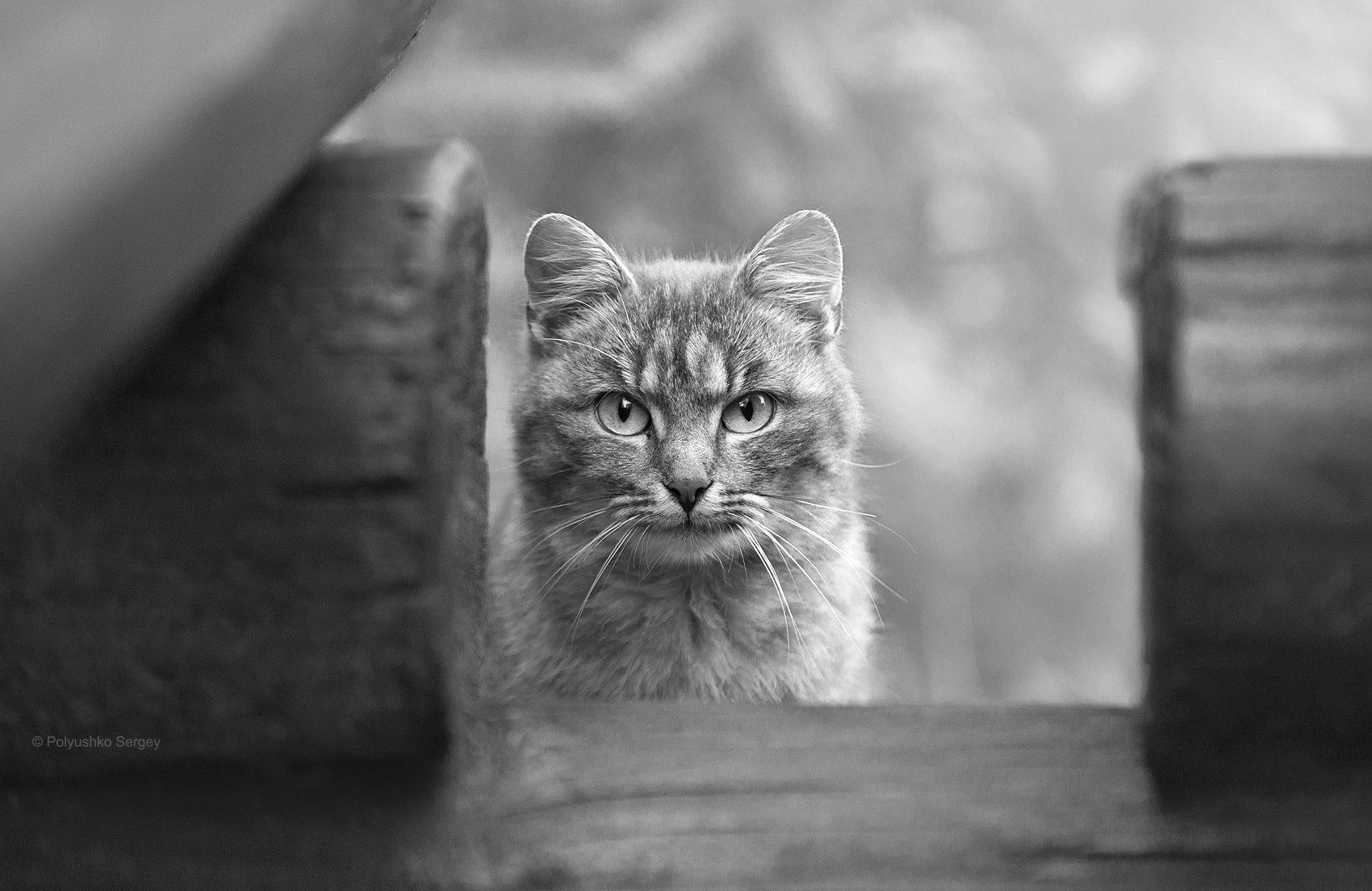 Cat, Кот, Полюшко Сергей