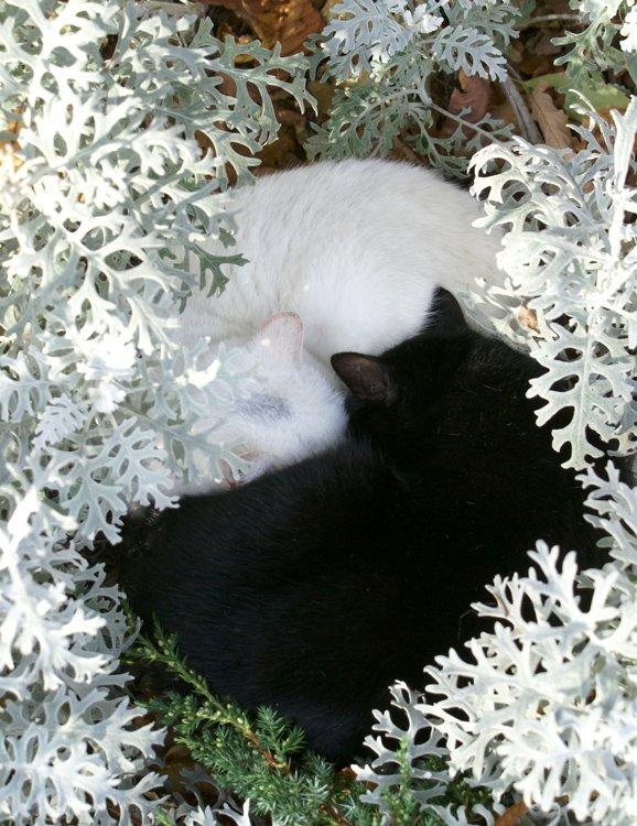 кошка, кот, Maria V. Gorskaya