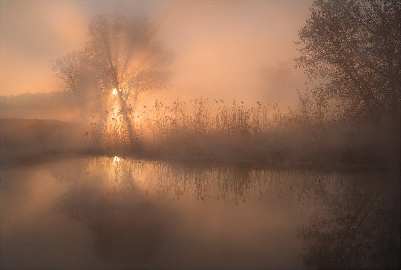 утро, река, туман, солнце, лучи, весна, sony, Александр Киценко