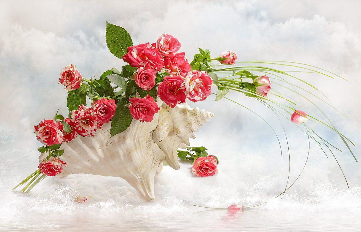 раковина, ракушки, розы, цветы, Лебедева Светлана
