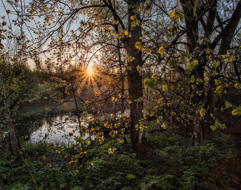 Подмосковье, весна, Купавна, Андрей Леонидович