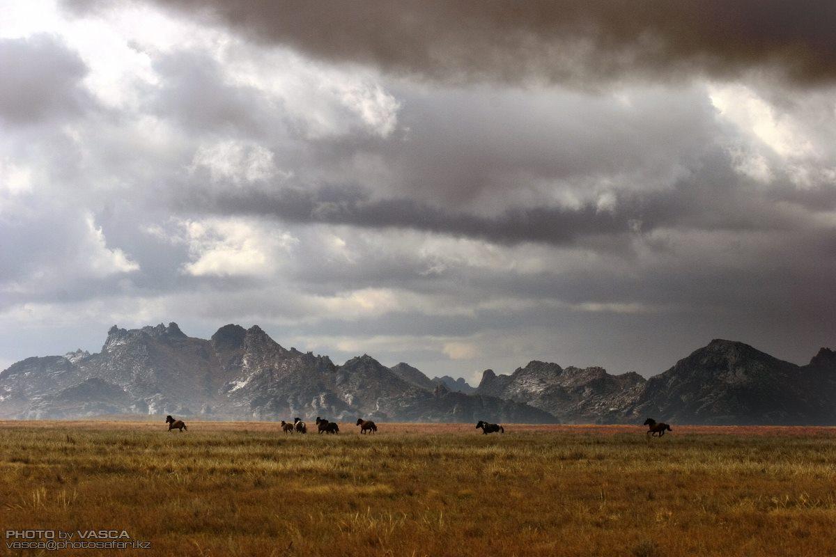 природа, Казахстан, Лошади, Vasca