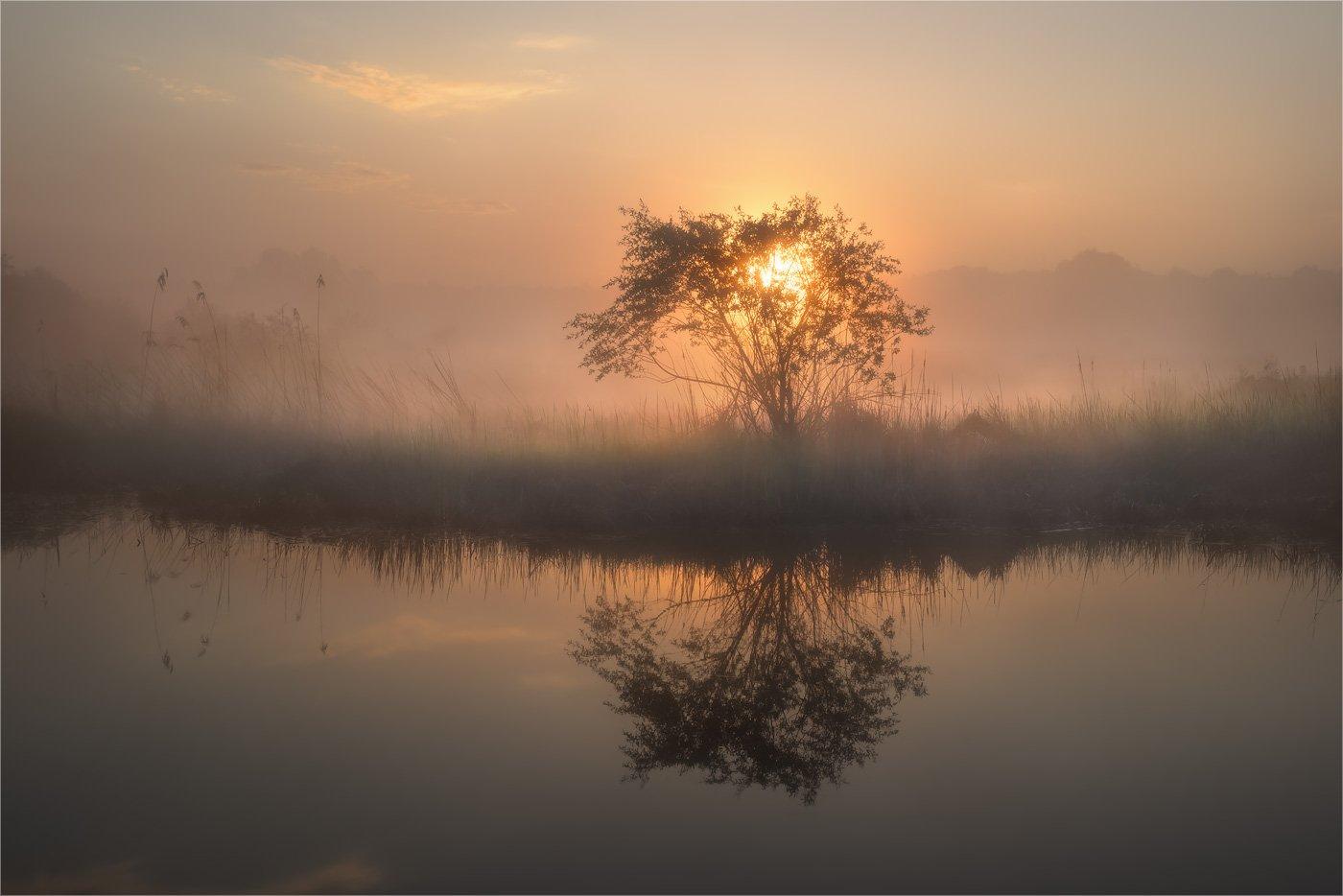 болото, весна, луг, озеро, отражение, туман, утро, Александр Киценко