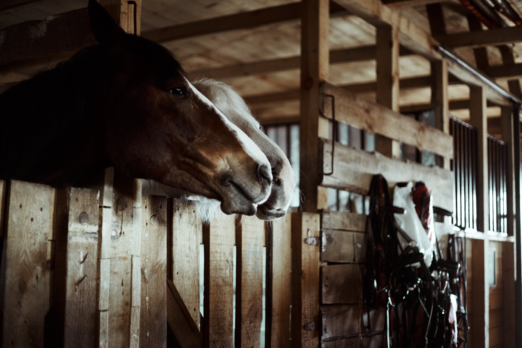 horses, stables for horses, steed, hoss, конь, лошадь, конюшня, , Маховицкая Кристина