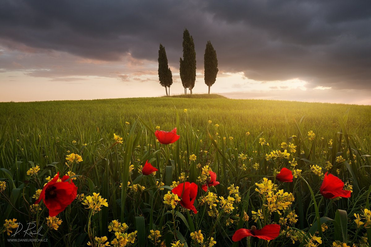 italy, tuscan, tuscan, san quirico d´orcia, pienza, spring, morning, poppies, flowers, sunlight, clouds, meadow, field, spring meadow,cypress, cypress grove, grove, sun, daniel rericha,, Daniel Rericha