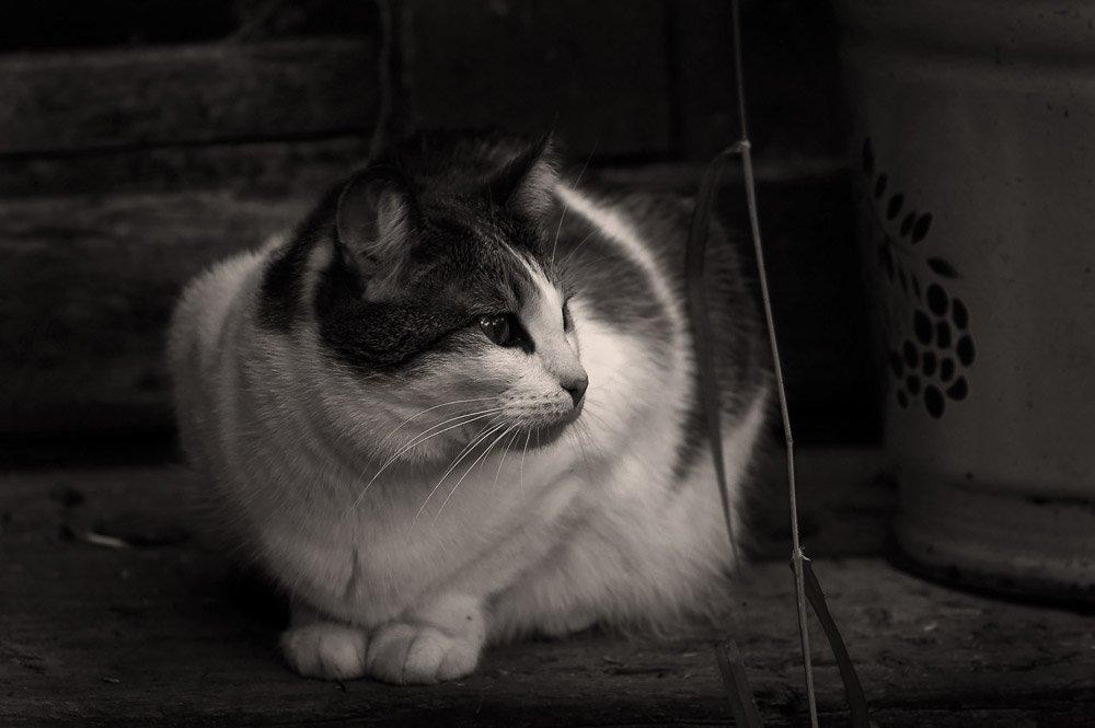 кошки дача джульетта джулька жук, nadyk