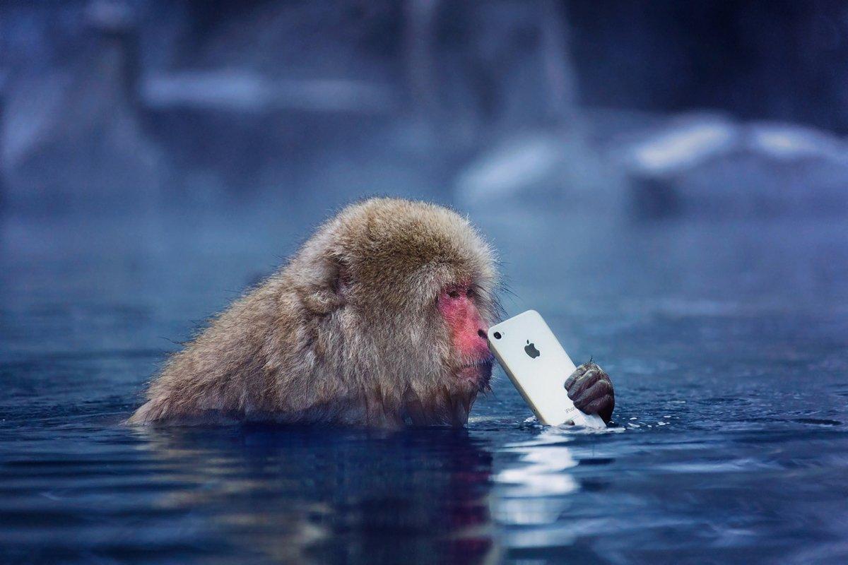 япония, обезьяна, iphone, apple, Slavado