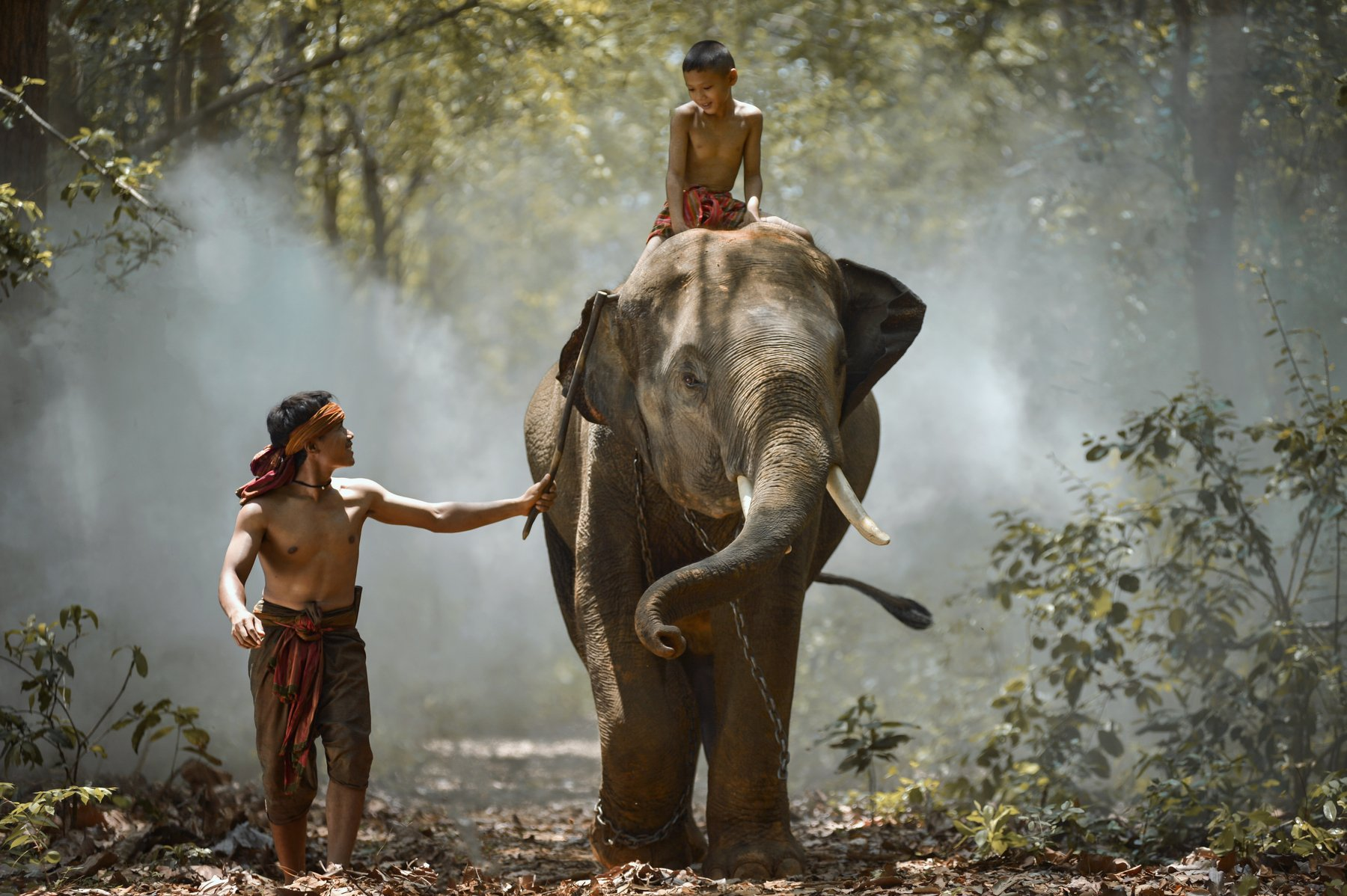 Action, Aec, Africa, Asia, Asian, Bearfoot, Beautiful, Boy, Child, Elephant, Homestay, Man, Saravut Whanset