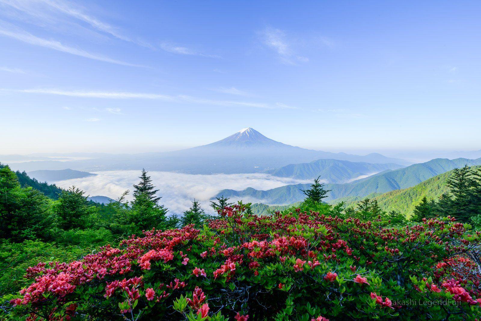 fuji,mountain,japan,azalea,red,green,blue,sea of cloud,cloud,tree,lake,spring,flower, Takashi
