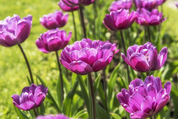 Весна, Природа, Тюльпаны, Svetlana Tkachenko