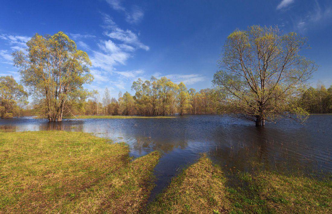 Трава луг колея вода деревья лес облака весна, Георгий Машковцев