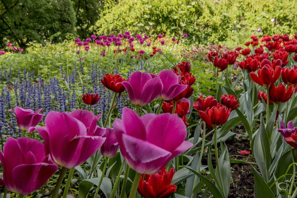 Весна, Парк, Природа, Тюльпаны, Цветы, Svetlana Tkachenko