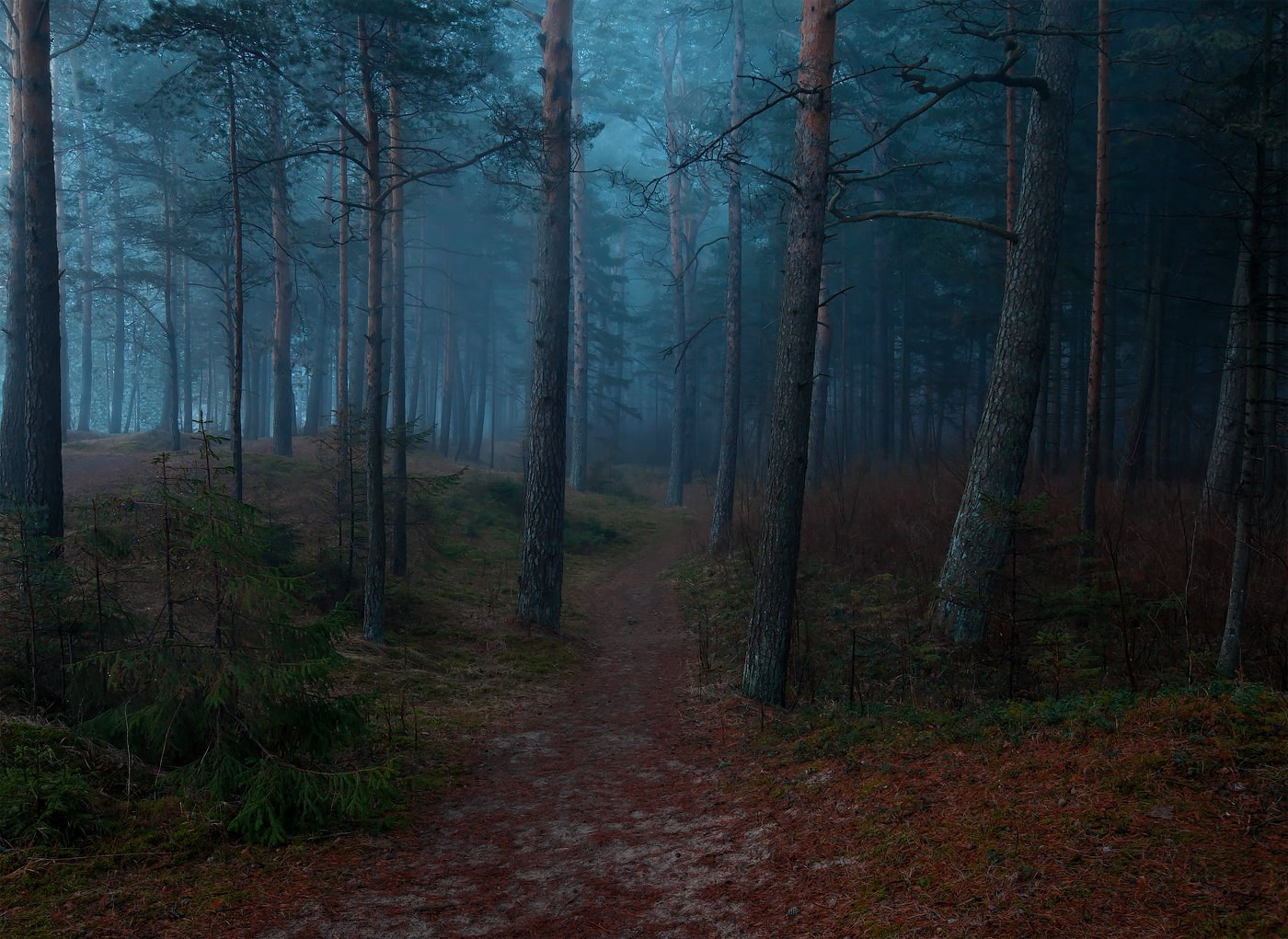 атмосфера, ключенков, лес, пейзаж, туман, эстония, Kljuchenkow Aleksandr