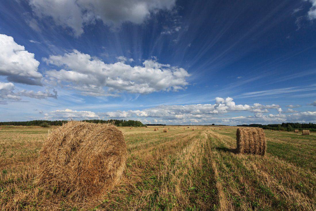 Поле трава сено рулоны лес облака лето, Георгий Машковцев