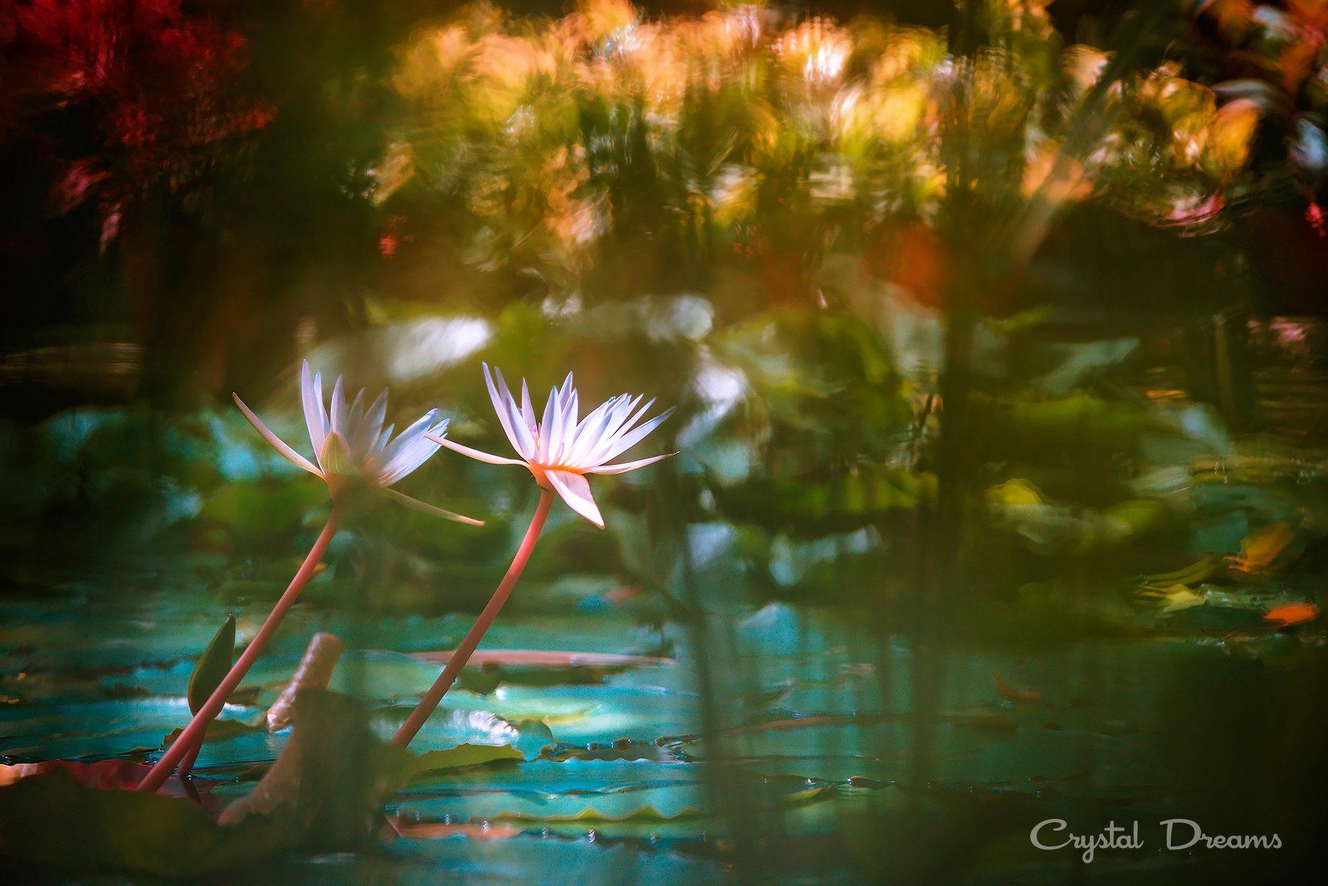 """Impressionism in the botanical, Art, Bokeh, Color, Crystal Deams, Nature, Крылова Татьяна"