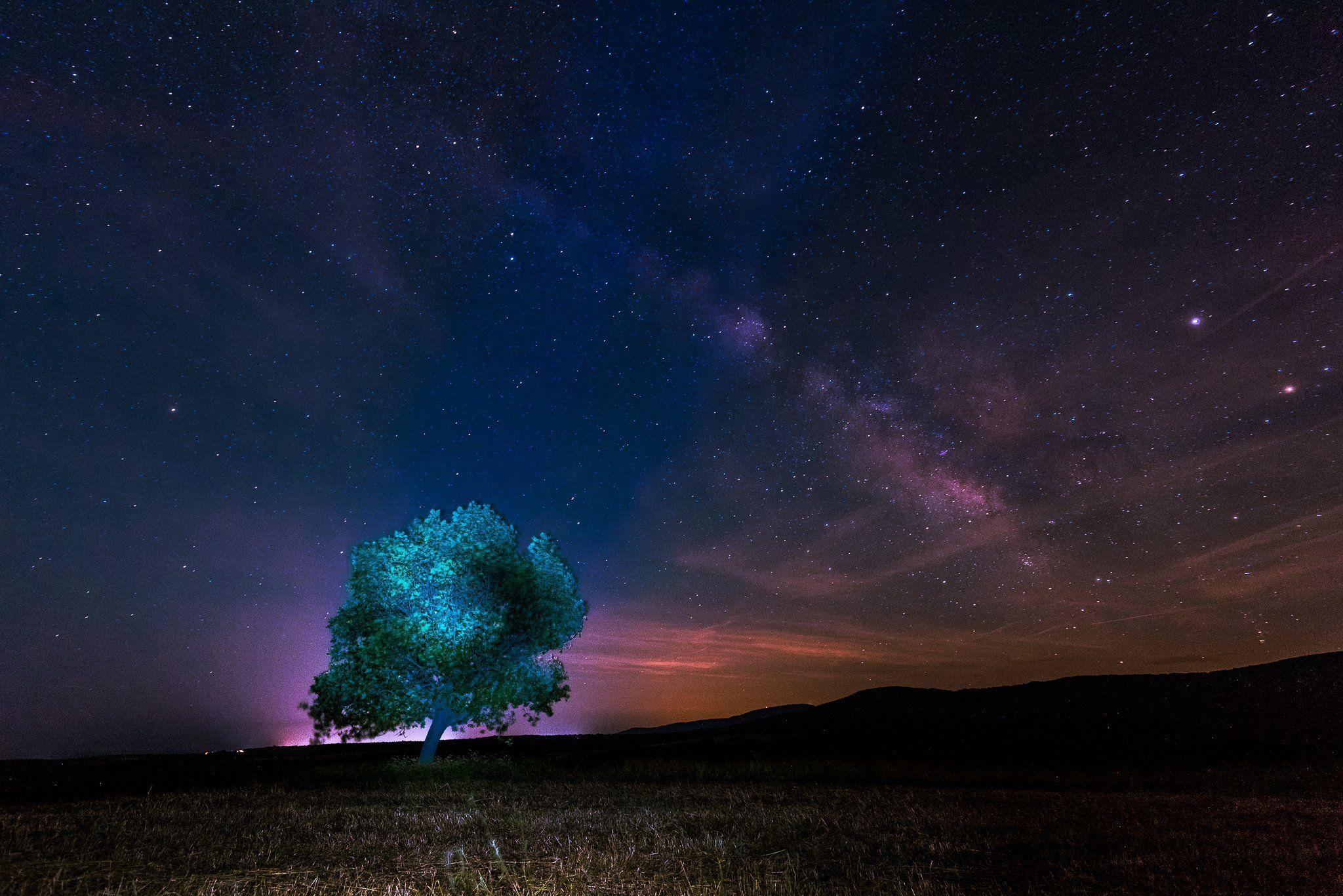 milky way, nightscape, tree, sky, stars, field, Jeni Madjarova