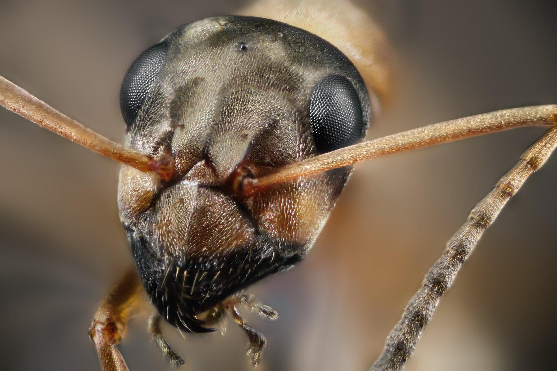 ant macro wild insect small micro nikon, ნიკოლოზ მესხი