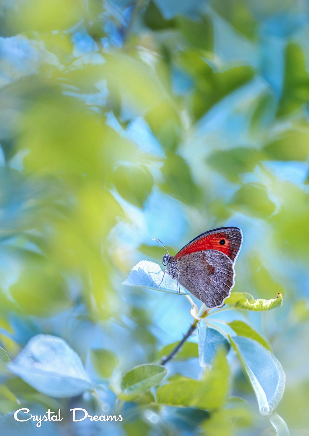 butterfly, color, crystal deams, nature, Крылова Татьяна
