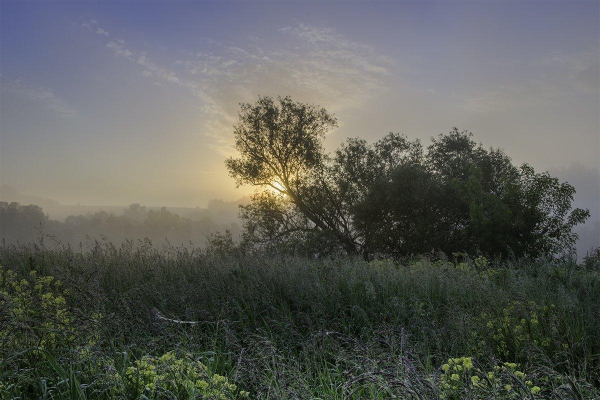2016, D3100, Nikon, Июнь, Лето, Природа, Рассвет, Россия, Тульская область, Утро, Денис Щербак