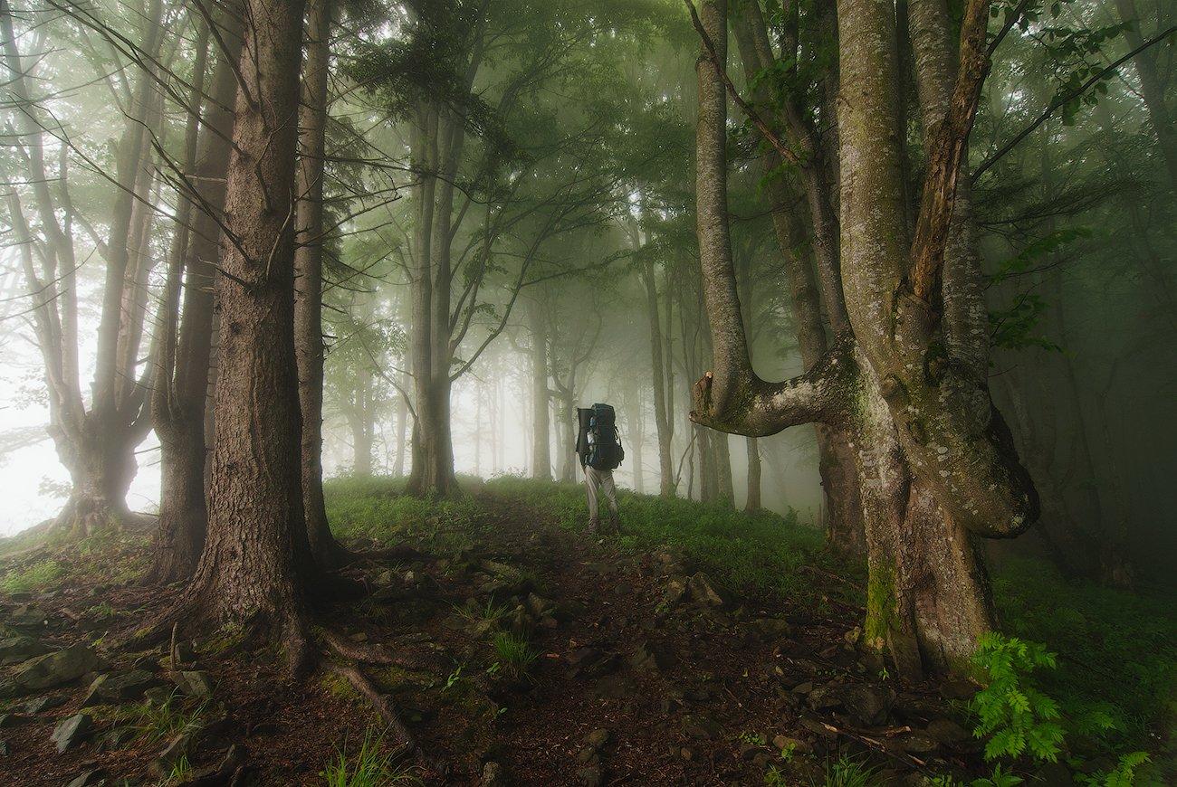 горганы, карпаты, лес, туман, flyman