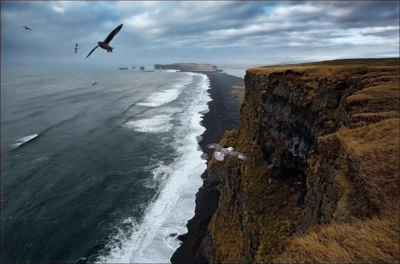 Исландия мыс Вик Vik чайки океан волны, Vadim Nikiforov