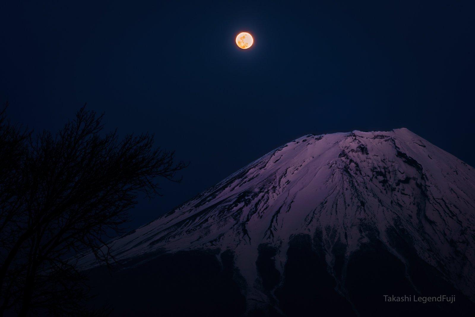 fuji,mountain,night,luna,moon,snow,purple,tree,, Takashi