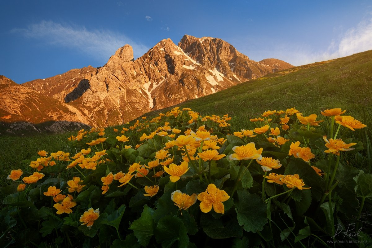 Alps, Dolomites, Italy, South Tyrol, Tyrol, Belluno, Alto Adige,  Passo Giau, Giau, Passo, Trentino, europe, travel, summer,  summer landscape, daniel rericha, evening colors, evening, evening light, mountains, mountain, flowers, peaks, sky, clouds, sunse, Daniel Rericha