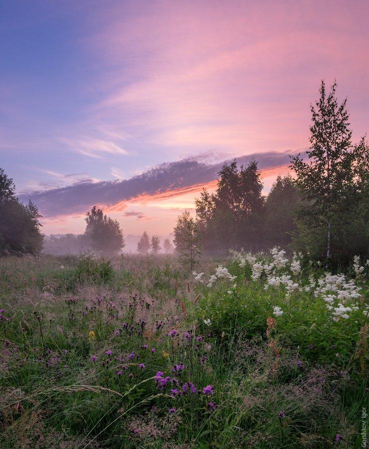 верторама, деревья, красивое небо, лето, луг, панорама, пейзаж, подмосковье, полевые цветы, природа, разнотравье, рассвет, туман, утро, цветы, Горшков Игорь