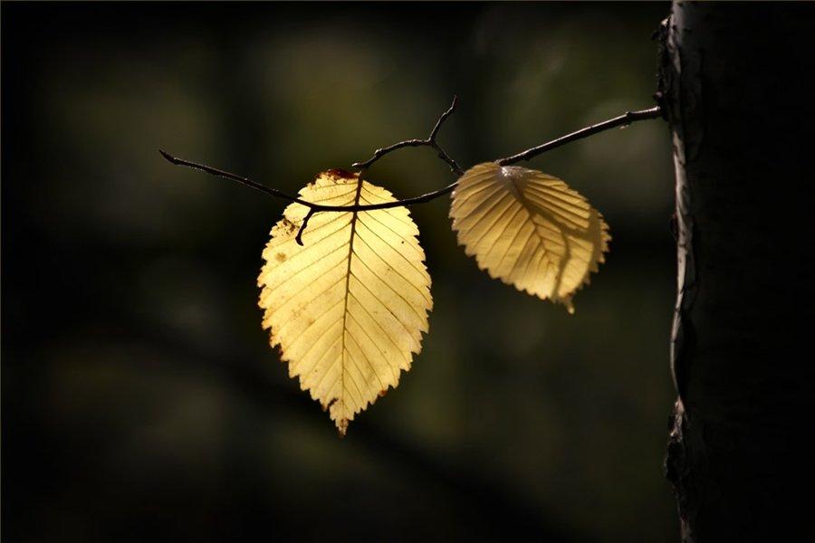 осень, листва, nadyk