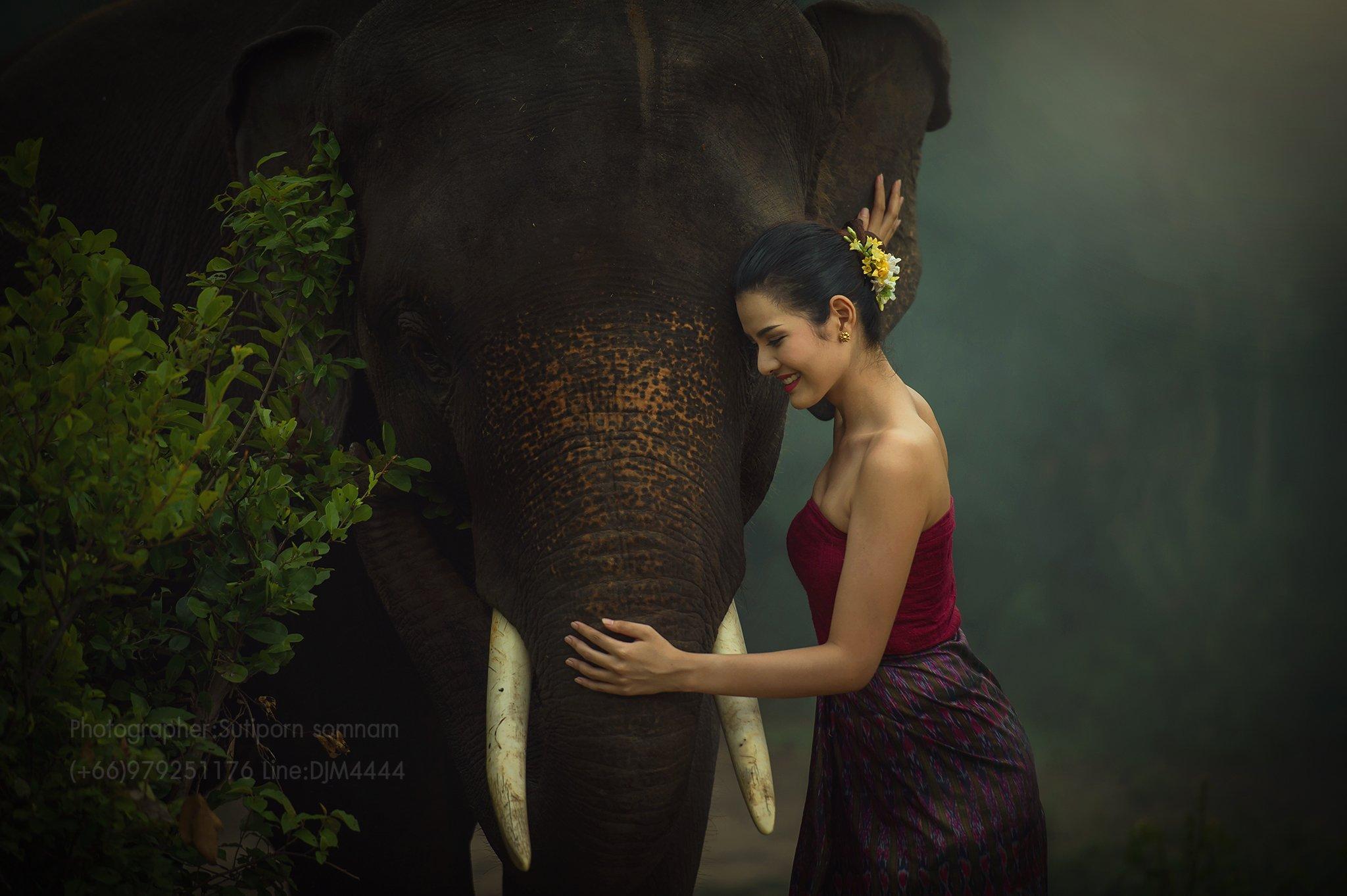 portrait,elephat,asia,cambodia,thai,wildlife,, SUTIPORN SOMNAM