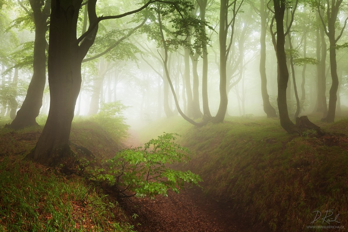 Czech republic, Ore mountains, North Bohemia, Bohemia, Tschechische republik, Erzgebirge, Europe, travel, nature, landscape, mist, fog, summer, summer forest, forest, rain, wet, rainy forest, rainy day, mountains, fine art, foggy, foggy forest, summer col, Daniel Rericha