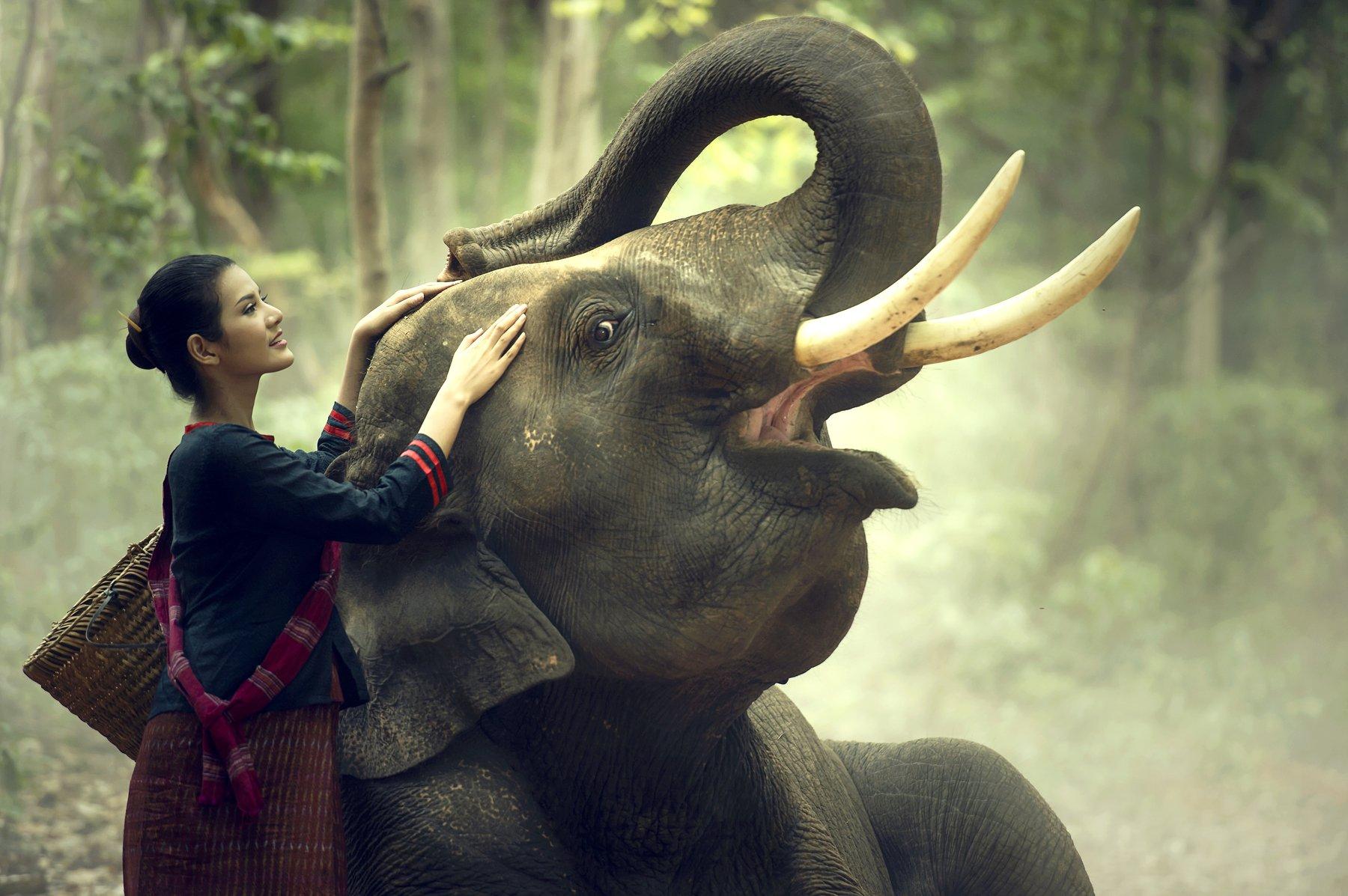 elelphant,portrait,woman,tradition,asia,laos,cambodia,thailand,beautiful,, SUTIPORN SOMNAM