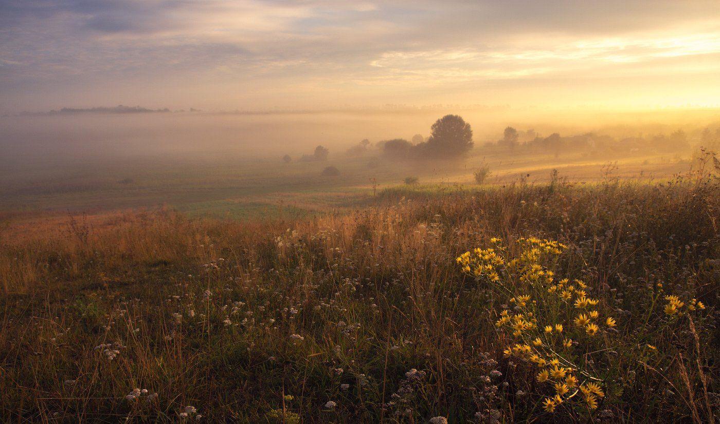 август, солнечное утро, туман, утро, цветы, Сергей Добровольский