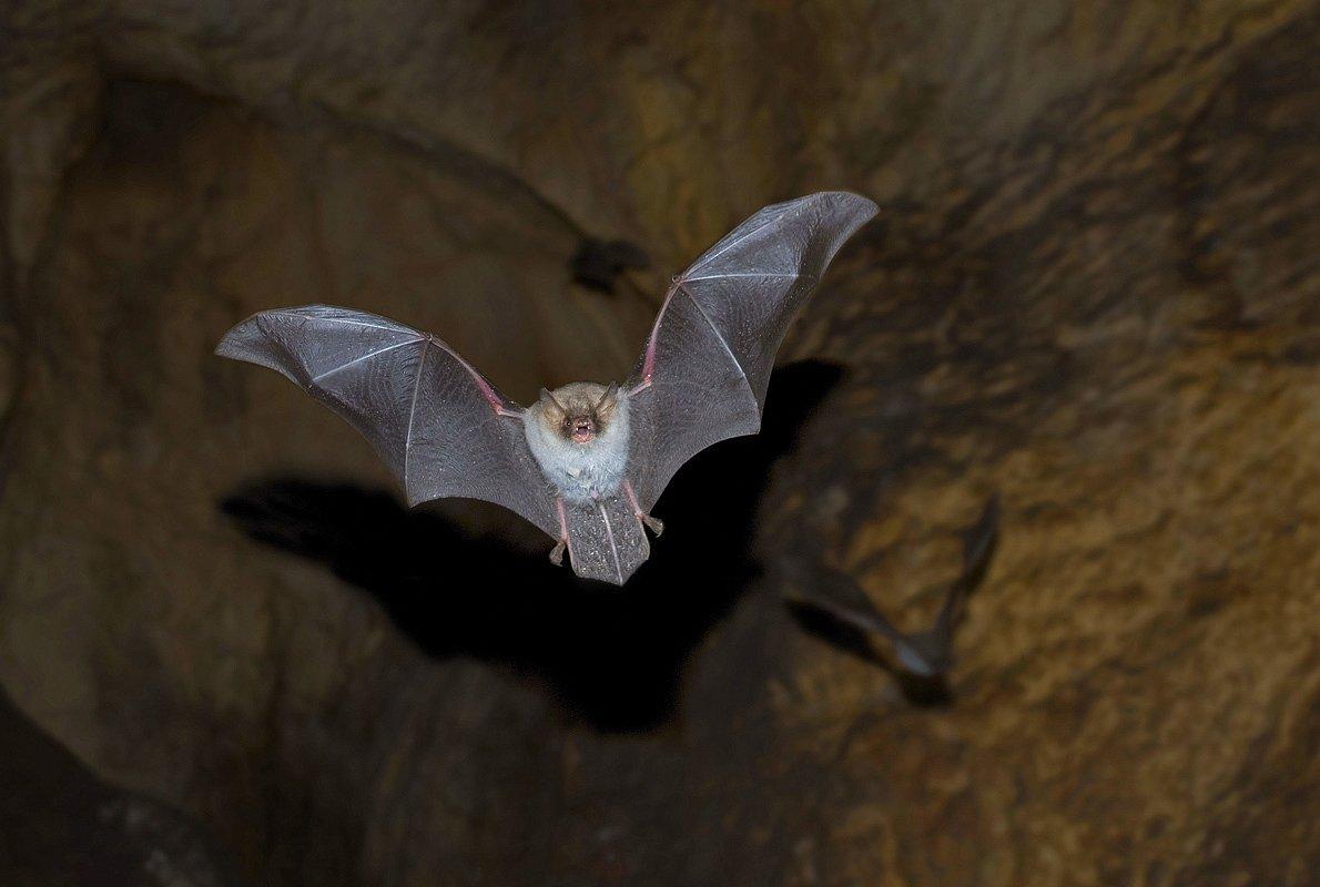 летучая мышь, пещера, башкирия, пропащая яма, Руслан Елисеев