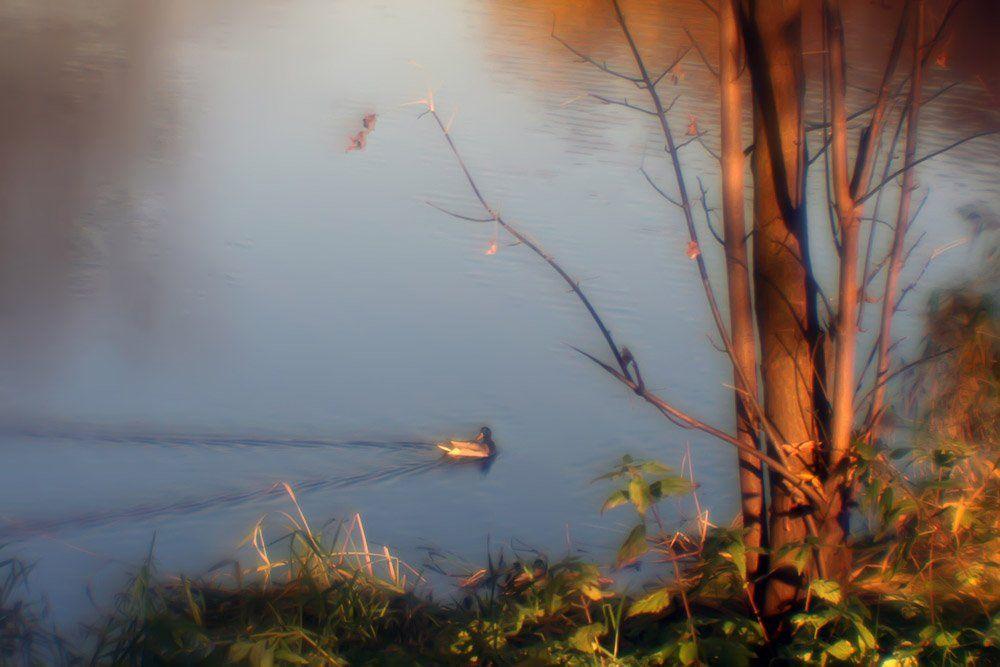 монокль, осень, пруд, уточка, nadyk