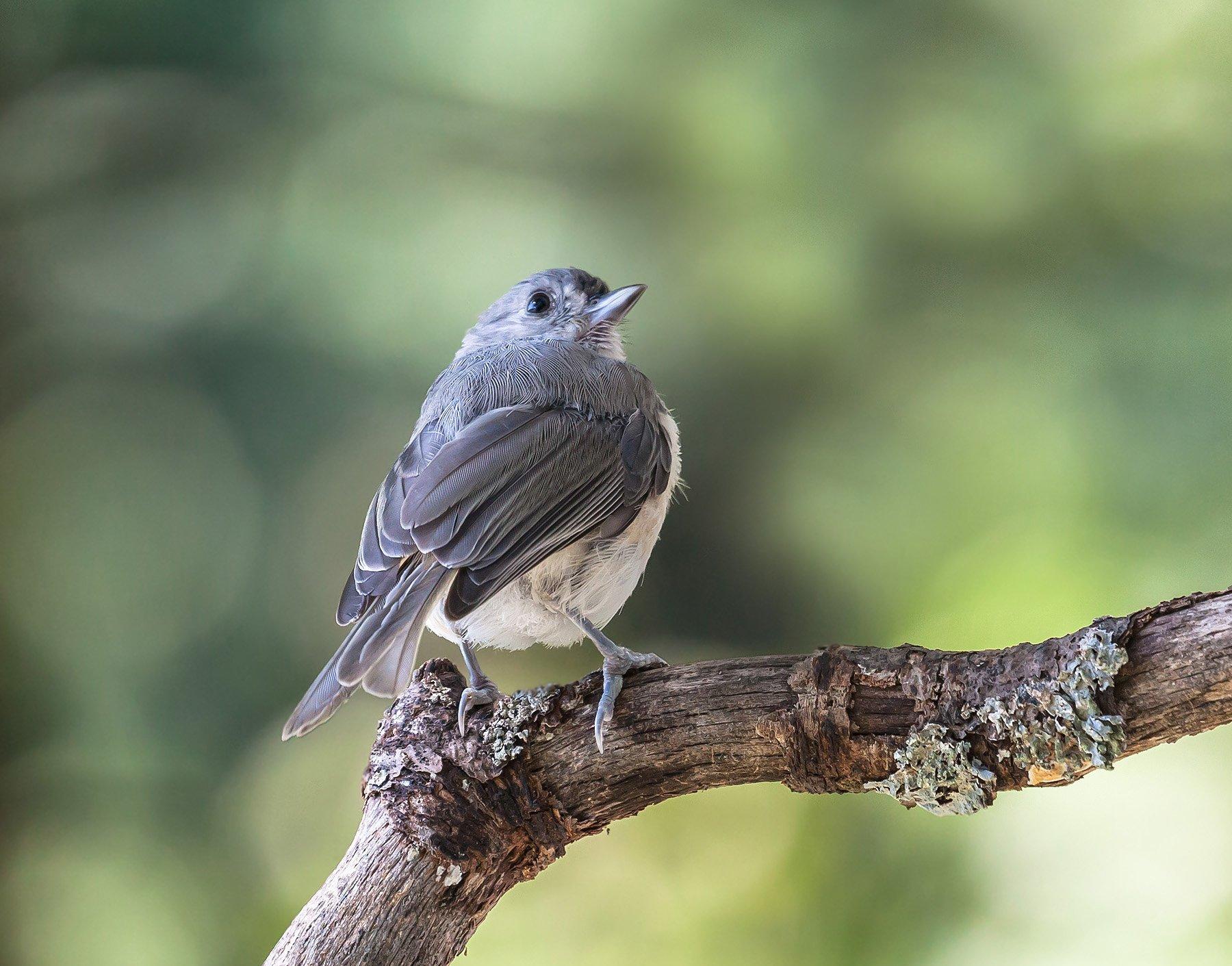 животные, лето, природа, птицы,фотоохота,, Антонина