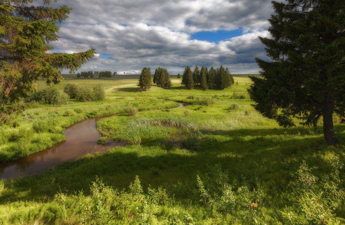 Трава зелень лес елки облака весна, Георгий Машковцев