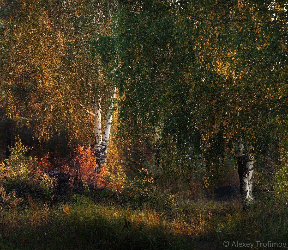 Ангара, Осень пейзаж, Сибирь, Алексей Трофимов