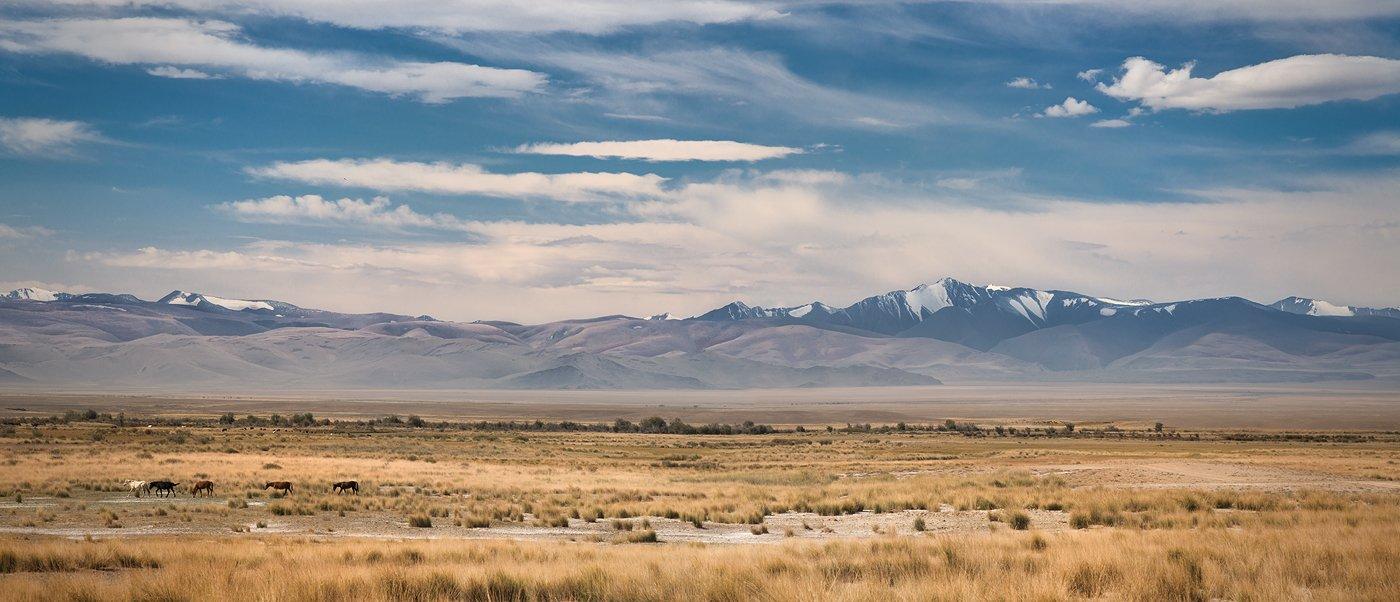 панорама, пейзаж, природа, степь, горы, хребет, большой, широкий, лошади, Алтай, сибирь, Дмитрий Антипов