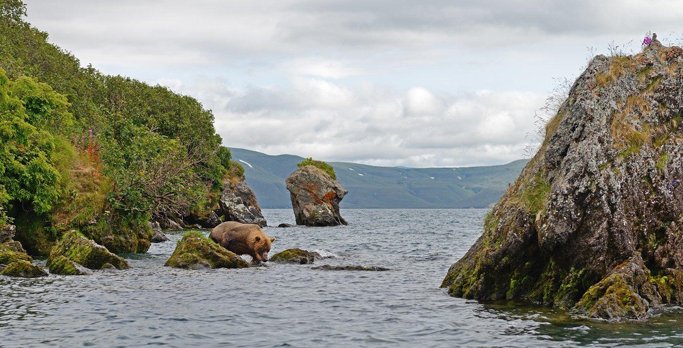 Бурый медведь, Курильское озеро, Сибирский пепельный улит, Александр Малецкий