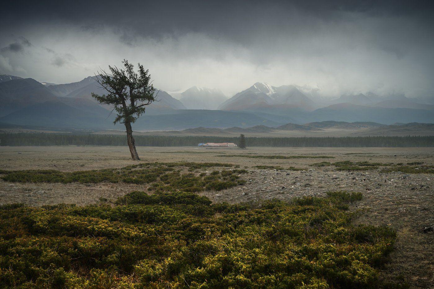 пейзаж, природа, горы, степь, долина, дерево, непогода, туман, облака, хребет, вершины, большой, высокий, красивая, алтай, сибирь, Дмитрий Антипов