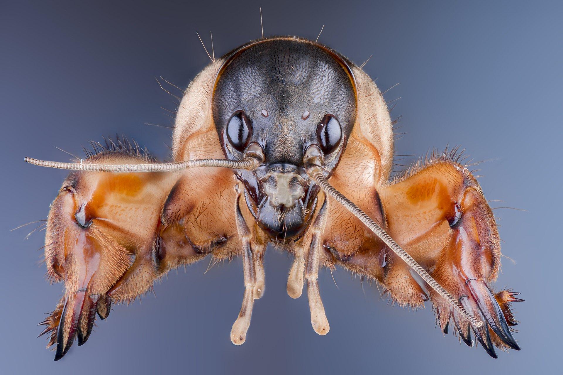 macro insect wildlife, ნიკოლოზ მესხი